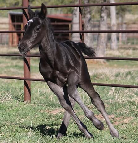 CD Diamond x Cat Scann - 2017 Colt