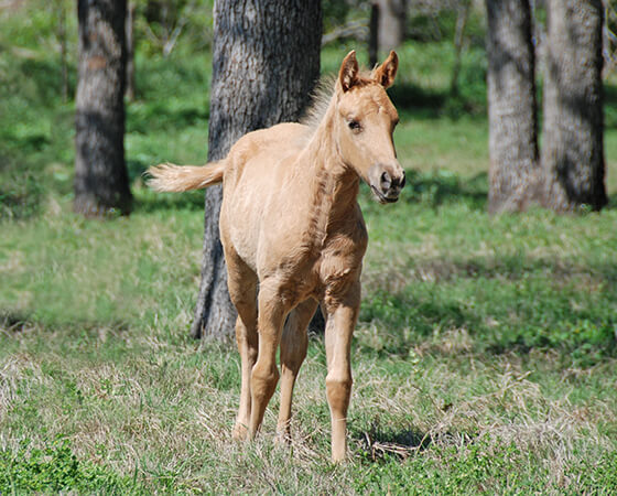 CD Diamond x Missin Reylena - 2017 Filly