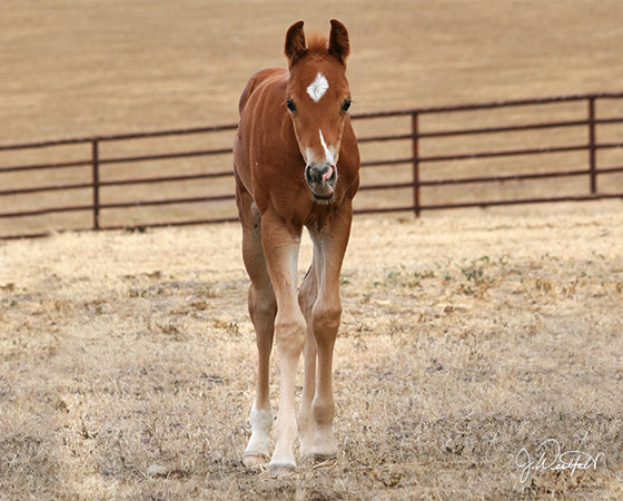 CD Diamond x Amanda Starlena - 2015 Colt