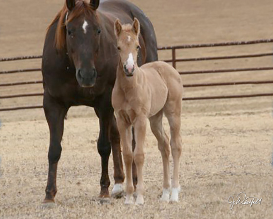 CD Diamond x Whizs Katrina - 2015 Filly