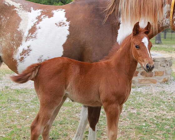 CD Diamond x Catlike Kit - 2019 Filly
