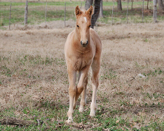 CD Diamond x Pastels Gina - 2019 Colt