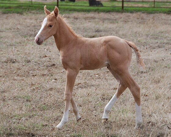 CD Diamond x Starlit Rita - 2019 Colt