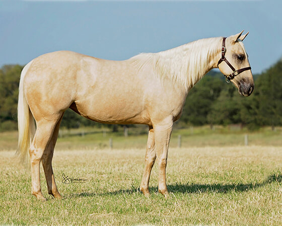 SJR Diamonds Suezie - CD Diamond x Suepernatural - 2016 Palomino Filly