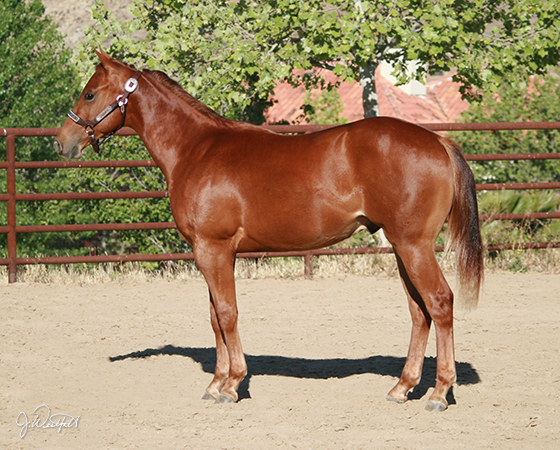 SJR Diamond Oak - CD Diamond x Oak N Sugs UFO - 2014 Colt