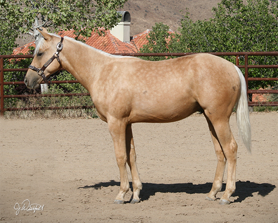 SJR Diamond Whiz - CD Diamond x Sienna Whiz - 2014 Colt