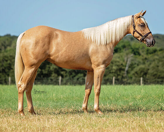 SJR Diamonds Sugar - CD Diamond x SJR Missin Metallica - 2018 Palomino Filly
