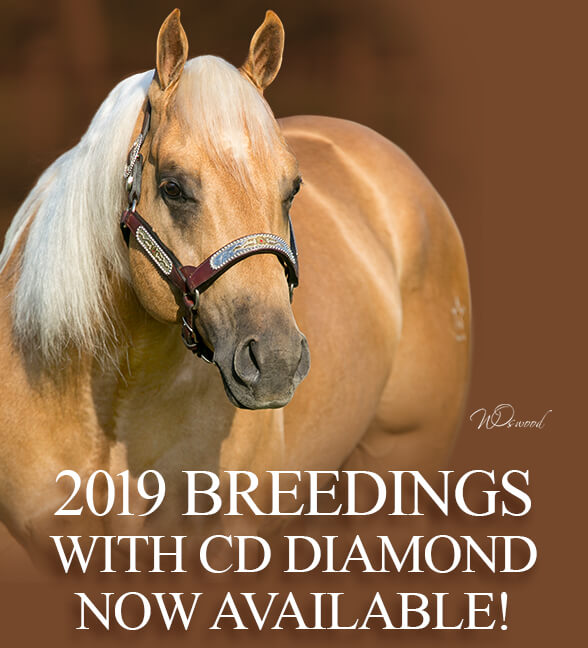 2019 Breedings for CD Diamond now available
